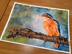 "Kingfisher....14""x11"" watercolour and ink.... (GP1805) Tags: art artwork artist watercolor watercolour ink inkdrawing inktober draw drawings kingfisher derwent fabercastell winsorandnewton"