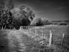 Autumn walk (PHOTOGRAPHY Toporowski) Tags: schwarzweis autumn kontrast landschaft landscape contrast blackwhite herbst eschweiler nrwnordrheinwestfalen deutschland deu