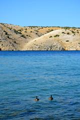 Going Out To Sea [Lopar - 27 August 2018] (Doc. Ing.) Tags: 2018 rab croatia otokrab rabisland happyisland kvarner kvarnergulf summer mediterraneansea adriatic lopar landscape nikond5100