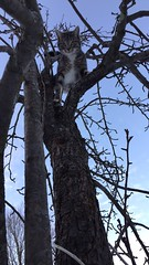 Cat In A Pear Tree (TangerinesDreamFinds) Tags: pear cat kitten tabby tiger