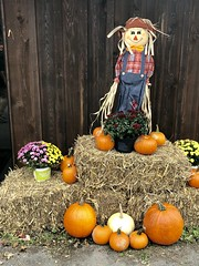 Fall at Hungry Mother (vastateparksstaff) Tags: fall pumpkins leaves mums scarecrow giftshop decorations decor outdoor