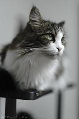Fantôme:HOPE… (miyukiz4 ɥsıןƃuǝ ɹood) Tags: кошка mačka кот katt köttur კატა gat katze macska chat katė pisică cat котенок pisoi kačiukas kotek chaton cica kätzchen mačiatko kettlingur kitten