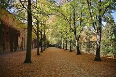 Autumn - Herbst (Hugo von Schreck) Tags: hugovonschreck autumn herbst fantasticnature