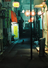 (jellyfish88) Tags: 35mm film analog filmphotography analogphotography tokyo street night alley cat