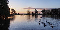 Sunrise Across the Pond in Harold Park_stitch (Mel_is_Moving) Tags: water bradford epl6 olympus pen sky trees clouds outside microsoftice ducks reflections outdoor panorama pond tree birds park sunrise westyorkshire uk