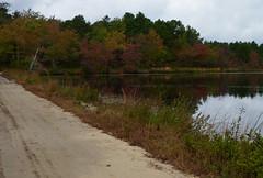 Union Pond (Dendroica cerulea) Tags: reservoir lake water trees foliage reflection road landscape whitesbog whitesbogvillage brendantbyrnestateforest lebanonstateforest pinebarrens newjerseypinelands burlingtoncounty nj newjersey