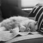 El gato thumbnail