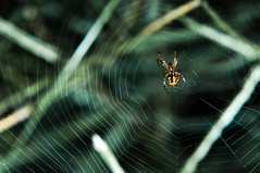 Web designer (ShikharF8) Tags: shikharf8in shikharf8 shikharsharmaphotography shikharsharma spider web green insect ruleofthirds dof spiderweb nature