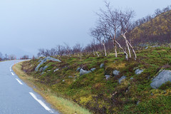 Norway (powell (pl)) Tags: norway norwegia