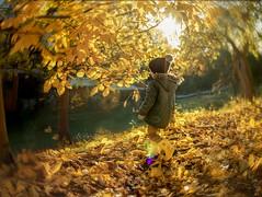 Golden Autumn (agirygula) Tags: autumn fall novemeber boy childhood yellow orange leaves child kiddo