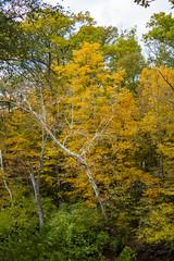 fall 2018-8 (kelsey.hurm) Tags: indiana fall whiteriver nature