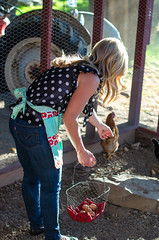Kim and Chickens -2 (sammycj2a) Tags: eggpron apron ford fordtractor chickens chickencoop maconcounty tennessee utah ogden northogden redbelly farmgirl levis sheerfabric blueeyes beautiful whitecrestedblackpolish