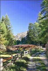 Promenons nous dans les bois ... (Charlottess) Tags: nikon5300 septembre alpes écrins hautesalpes
