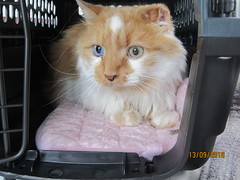 Clarke - 6 year old neutered male