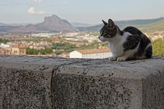 Who fakes who? (Eliza Eska) Tags: antequerra peñadelosenamorados city landscape mountain rock cat animal