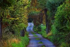 summer moods (JoannaRB2009) Tags: javorník czechrepublic path alley avenue road dark evening tree trees chestnut green nature summer mood