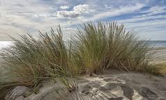 Sea Dunes (ronwestbroek2) Tags: reed olympus netherlands zeeland clouds nature landscape sea sand view