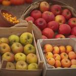 Fruits of the Season thumbnail