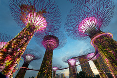 Super Trees I (Alec Lux) Tags: singapore architecture asia bay blue bluehour bridge building buildings city cityscape colorful colors design east exterior garden gardensbythebay lights lightshow longexposure longexposurephotography marina marinabaysands modern night nightscape orient oriental outdoor outside park skyscraper structure supertree urban water way