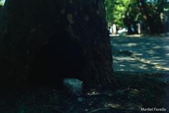 (maribelfiorella) Tags: analogue analogphoto analogphotography 35mm 35mmphoto outside streetphoto photographer diapo