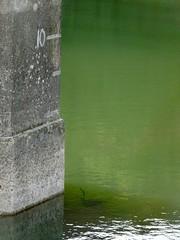 Pipe, Blaen Bran Reservoir, Upper Cwmbran 17 October 2018 (Cold War Warrior) Tags: pipe reservoir cwmbran blaenbran