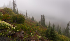Skyline Trail Hike - Mt Rainier NP (Darek3010) Tags: fog mtrainier paradise skylinetrail hike sky vacations