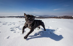 Fun moments (Pan.Ioan) Tags: dog canine pets nature winter snow playing fun animal