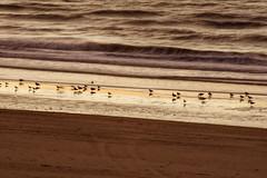 Hors saison - Exposition longue - Off season - Long exposure (p.franche Occupé - Buzzy) Tags: lapanne depanne lumière ensoleillé matin été sable plage vacances mer merdunord flandreoccidentale westhoek tourisme vagues sony sonyalpha65 dxo photolab belgium belgique belgïe europe pfranche pascalfranche nature eau sauvage mouettes water wild seagulls waves sand beach