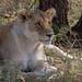 Safari Flickr (119 of 266)