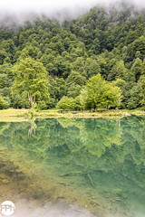 Lac de Bethmale (Frankhuizen Photography) Tags: lac de bethmale france 2018 mist fog brouillard frankrijk lake meer mystic mystiek bomen trees tree boom landscape natuur nature landschap water fotografie photography pyrenees pyreneëen lakeside pond eiland island île pyrénées reflection reflecties réflexions mysticisme paysage photographie arbres bergen mountains montagnes forest grass river field wood mountain sky