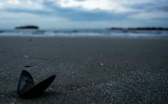 Spiaggia sera conchiglia (berightbackblog) Tags: rimini romagna emiliaromagna italia italy mare streetart