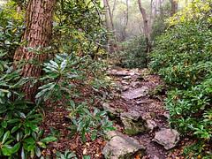 IMG_2938.jpg (Darren and Brad) Tags: hiking hawkmountainsanctuary hike riverofrockstrail hawkmountain appalachian rhododendron pennsylvania