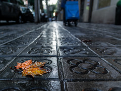 Tardor de contrast (Ramon InMar) Tags: tardor autumn leaves fulles rain pluja barcelona