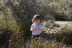 deep in thought (louisa_catlover) Tags: cranbourne royalbotanicgardenscranbourne melbourne victoria australia garden nature outdoor spring october sunny afternoon portrait family child toddler daughter tabitha tabby