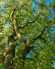 Life's a Beech (velodenz) Tags: fujifilmx100f keynsham saltford banes bnes manor road community forest beech tree velodenz england united kingdom uk greatbritain gb outside outdoors 1000 views 1000views flickr phot photo photograph photography digital image pic picture he