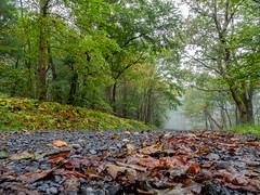 foggy path (Dave_Bradley) Tags: path road foggy fog leaves olympusodmem5 olympus outdoorphotography outdoor naturephotography pennsylvania usa