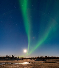 R63_5665w.jpg (ronmackaypei) Tags: nightsofwonder northerlights yellowknife