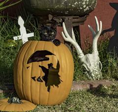 Halloween Kitten (shottwokill) Tags: blackcat cat nikon halloween holiday d5 pumpkin skull witch shadow yelloweyes catinpumpkin kitten