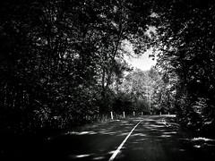 The great escape (G.Billon) Tags: drive cameraphone iphoneography iphoneografy iphone blackandwhite noiretblanc bw countryhouse tree road forêt forest rambouillet valléedechevreuse sonchamp gbillon