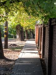 Narrow walk (Vurnman) Tags: california norcal nevadacounty nevadacity fallphotowalk smalltown autumn sidewalk wall brick trees