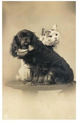 Postcard Cats 2004  ill pg 149 b (janwillemsen) Tags: cat dog bookillustration spaniel oldpostcard