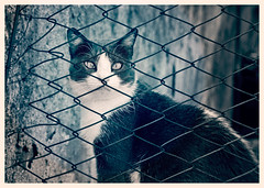 Because you look at me like that (Pepenera) Tags: cat cats gatto gato gatti felino