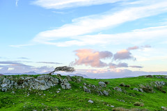 Muse Tree with Old Man beyond (timnutt) Tags: xt2 landscape sky hill lakedistrict trees fuji cumbria mountains rural 35mm fujifilm 35f2wr