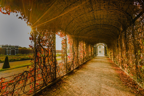 Autumnal pergola