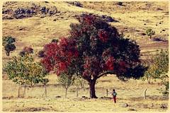 Stunning nature of Kurdistan (Kurdistan Photo كوردستان) Tags: کوردستانی کورد kurdistan کوردستان land democratic party koerdistan kurdistani kurdistán kurdistanê zagros zoregva zazaki zaxo zindî azadî azmar xebat xaneqînê christianity cegerxwin van love mahabad music arbil democracy freedom genocide herêmakurdistanê hawler hewler hewlêr halabja herêma judaism jerusalem kurdistan4all lalish qamishli qamislo qamishlî qasimlo war erbil efrînê refugee revolution rojava referendum yezidism yazidis yârsânism unhcr peshmerga peshmerge landscape mountain forest tree wood costume field grass