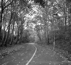 path (rotabaga) Tags: sweden sverige svartvitt göteborg gothenburg blackandwhite bw bwfp lomo lomography lubitel166 ilford 120 6x6 mediumformat mellanformat twinlens