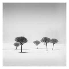 Charcoal Trees (Vesa Pihanurmi) Tags: trees foggy misty winter snow landscape nature minimalism espoo finland