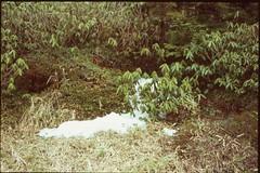 (✞bens▲n) Tags: pentax lx velvia 100f carl zeiss 35mm f24 flektogon film slide analogue snow spring ground
