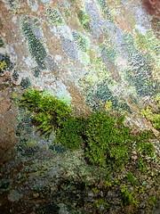 TreeBark-LangfordNo2 - Copy (iankellybn26dj) Tags: uk england wiltshire landscape trees light closeup macro texture