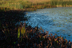Sunrise on the Slough (mb.kinsman) Tags: 2018 autumn mbkinsmanphotography september springbrook mbkinsman